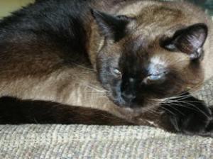 grumpy-sleepy-sluggy